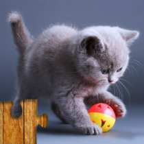 Cats Jigsaw Puzzles Games – For Kids & Adults 😺🧩 25.2 APK MOD