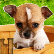 Dogs Jigsaw Puzzles Game – For Kids & Adults 🐶 26.4 APK MOD